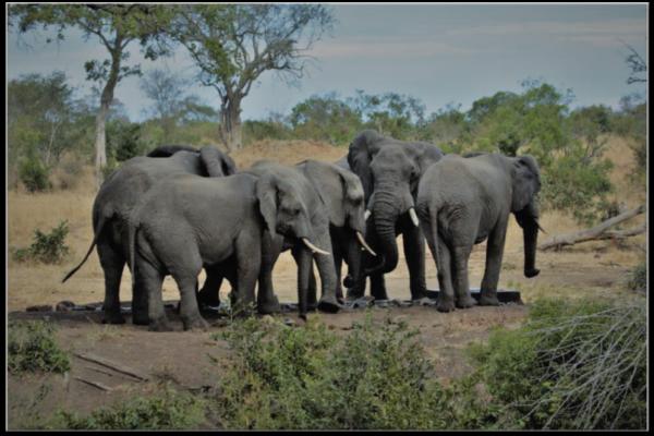 The bullies occupying the waterhole at Imbali Safari Lodge
