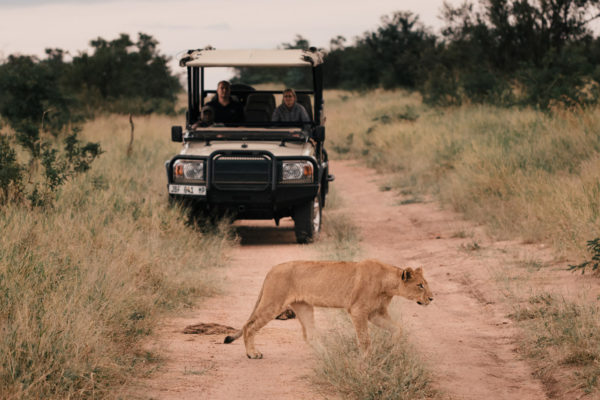 Located within the iconic Kruger National Park on a private 10,000 hectare concession